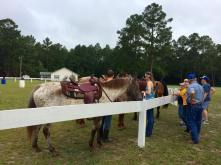 Campers and horses